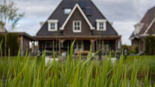 家の前の草