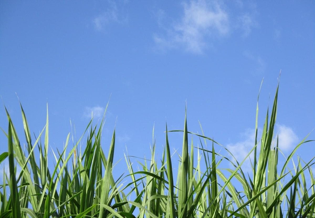 晴れてる草原