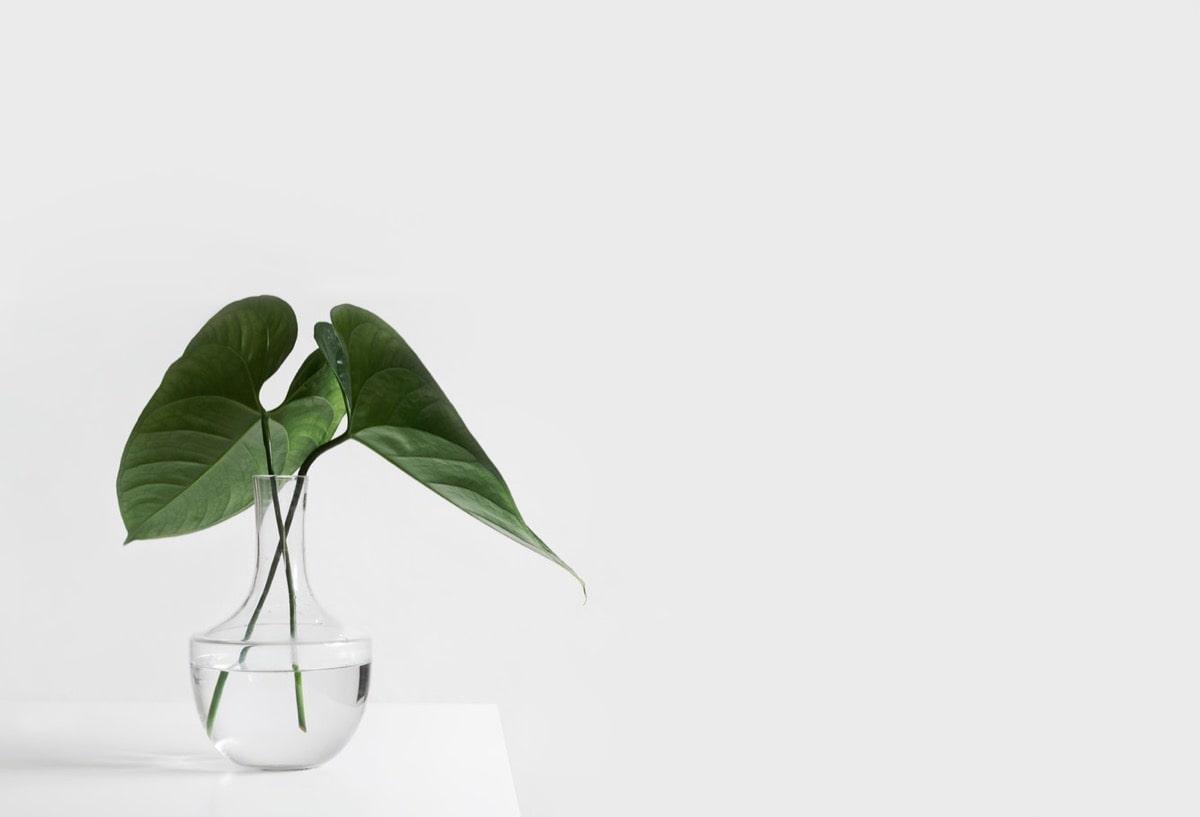 お風呂の中に植物